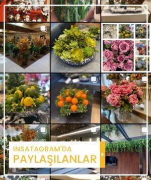 Kuk Çiçek Instagram'da Paylaşılanlar Mini Banner